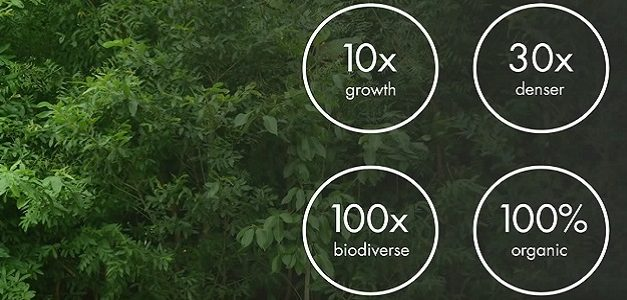 Afforestt: How to grow a tiny forest anywhere, quick!